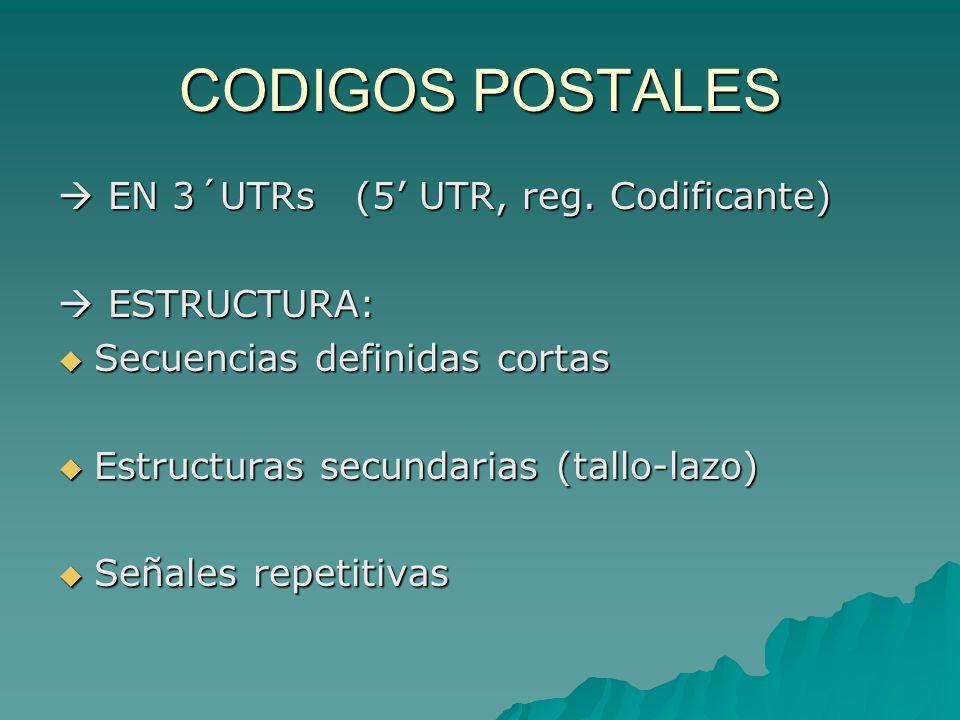 CODIGOS POSTALES  EN 3´UTRs (5' UTR, reg. Codificante)  ESTRUCTURA:
