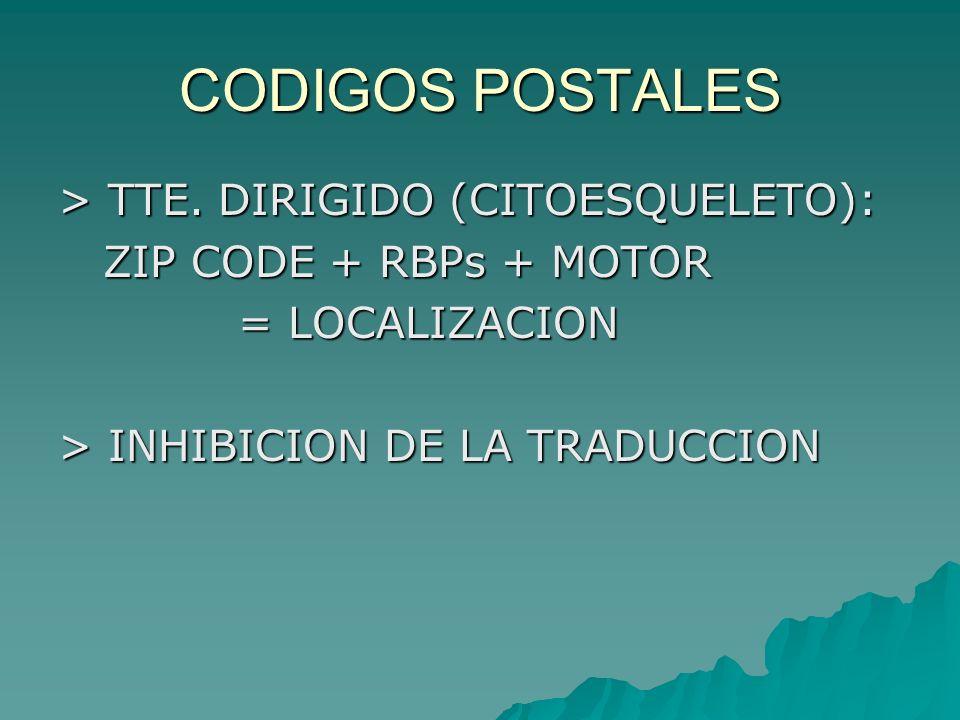 CODIGOS POSTALES > TTE. DIRIGIDO (CITOESQUELETO):