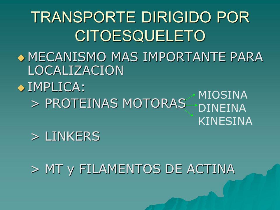 TRANSPORTE DIRIGIDO POR CITOESQUELETO