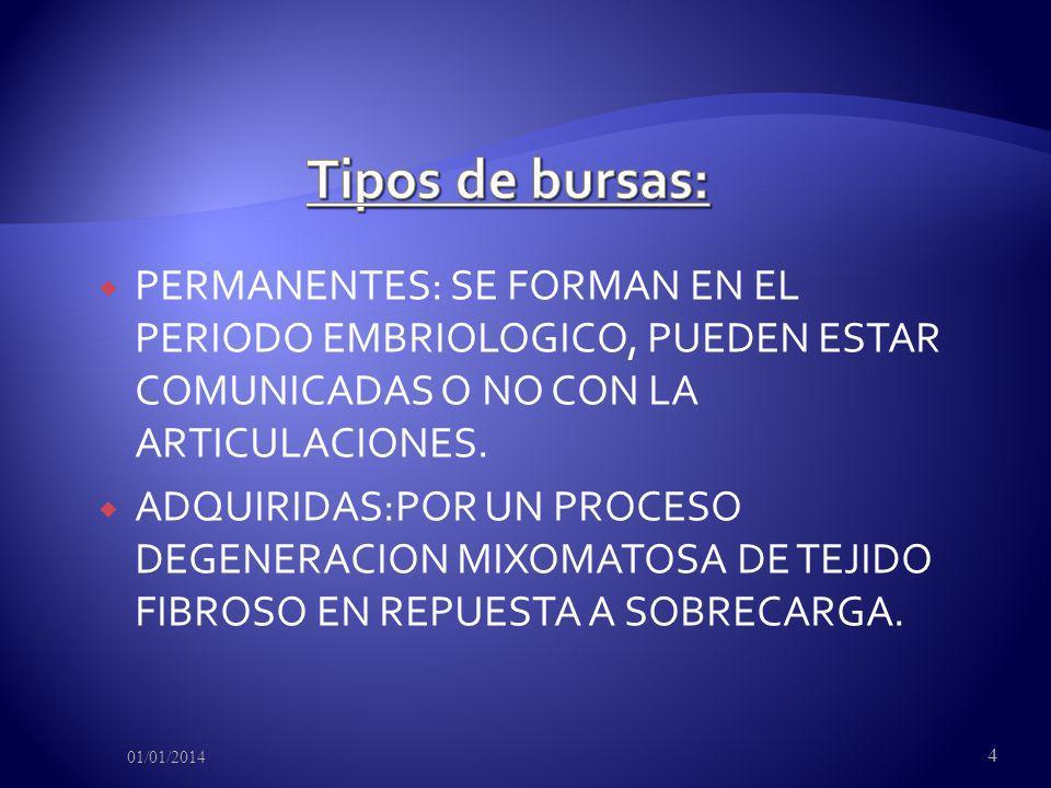 Tipos de bursas:PERMANENTES: SE FORMAN EN EL PERIODO EMBRIOLOGICO, PUEDEN ESTAR COMUNICADAS O NO CON LA ARTICULACIONES.