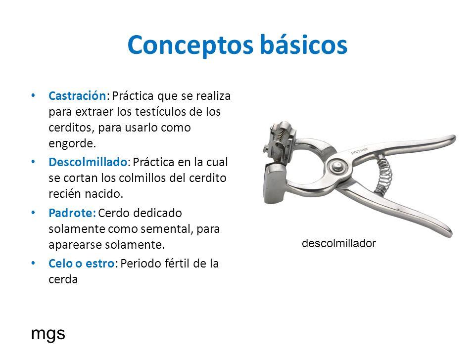 Conceptos básicos Castración: Práctica que se realiza para extraer los testículos de los cerditos, para usarlo como engorde.