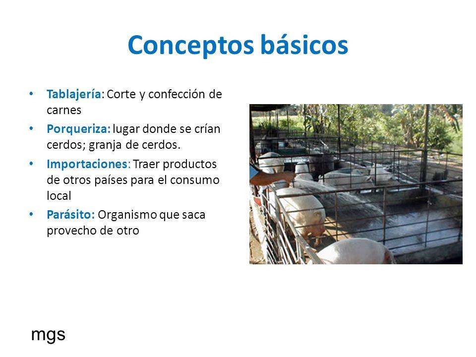 Conceptos básicos mgs Tablajería: Corte y confección de carnes
