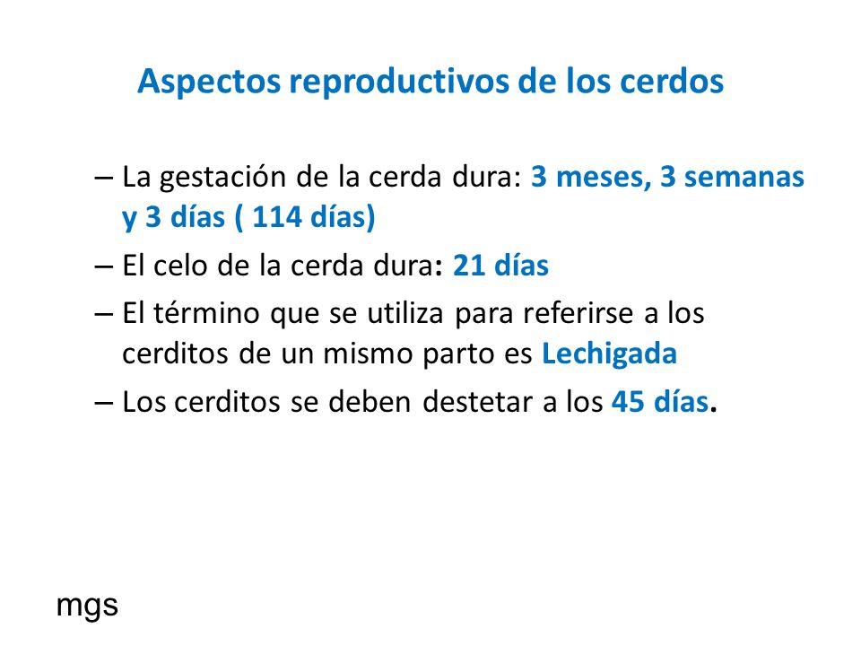 Aspectos reproductivos de los cerdos