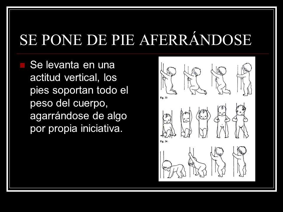SE PONE DE PIE AFERRÁNDOSE