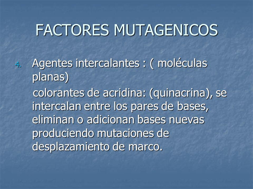 FACTORES MUTAGENICOS Agentes intercalantes : ( moléculas planas)