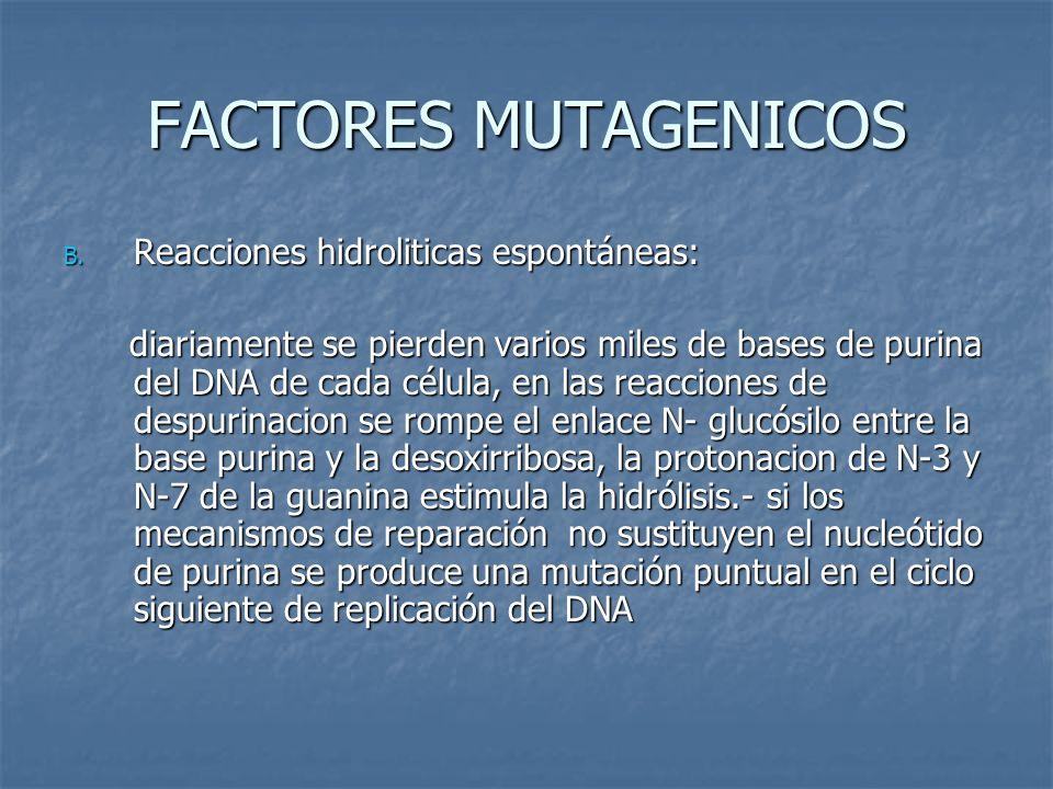FACTORES MUTAGENICOS Reacciones hidroliticas espontáneas: