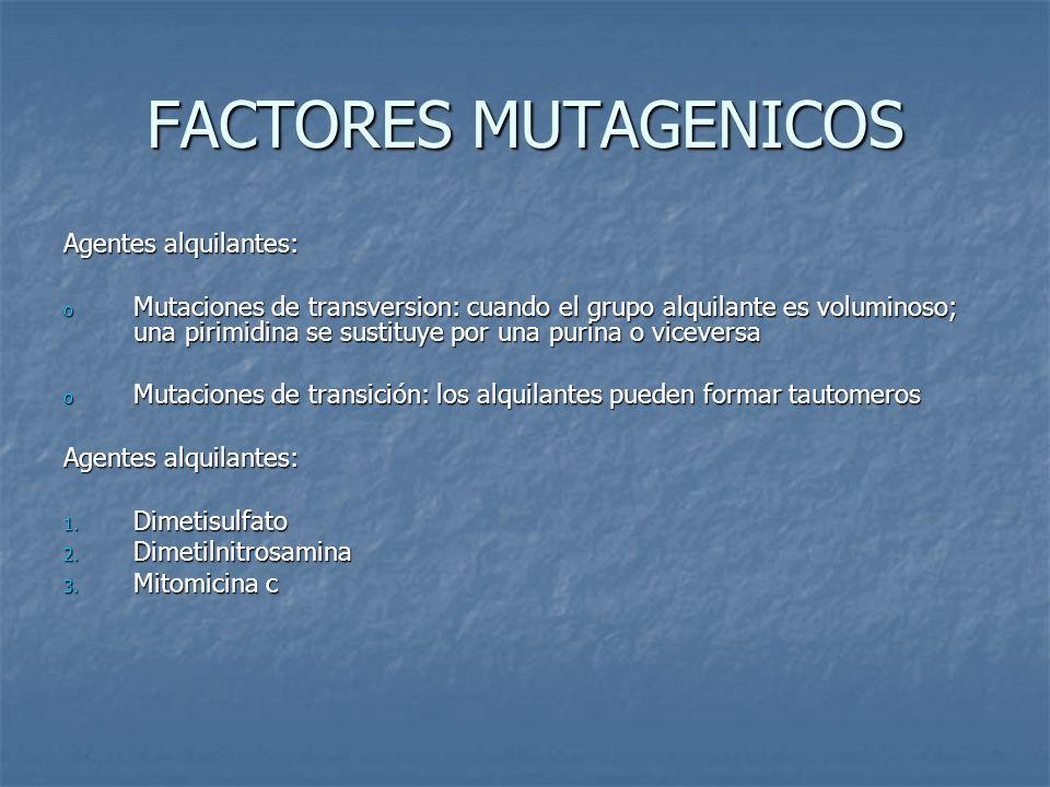 FACTORES MUTAGENICOS Agentes alquilantes: