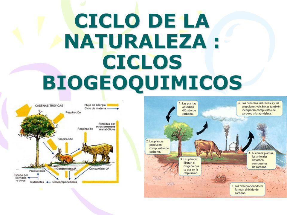 CICLO DE LA NATURALEZA : CICLOS BIOGEOQUIMICOS