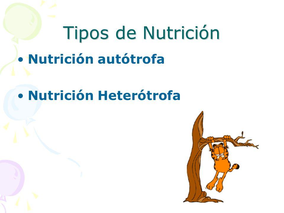 Tipos de Nutrición Nutrición autótrofa Nutrición Heterótrofa