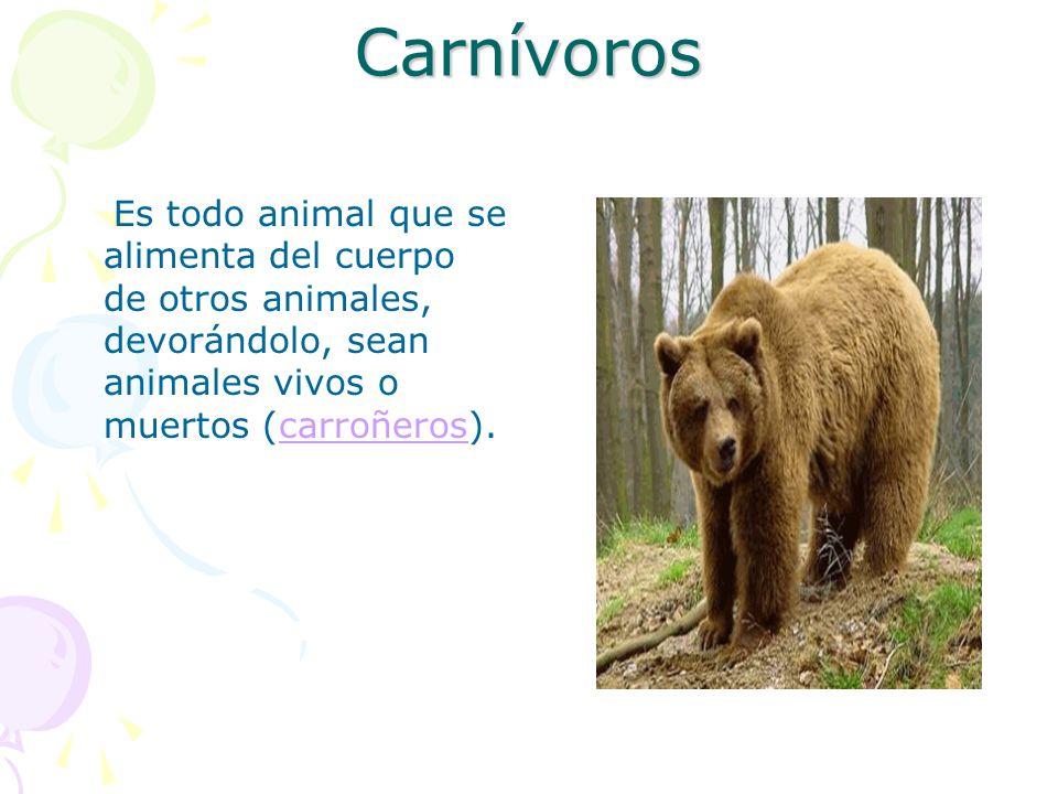 Carnívoros Es todo animal que se alimenta del cuerpo de otros animales, devorándolo, sean animales vivos o muertos (carroñeros).
