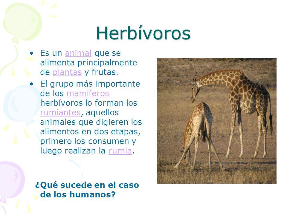 Herbívoros Es un animal que se alimenta principalmente de plantas y frutas.