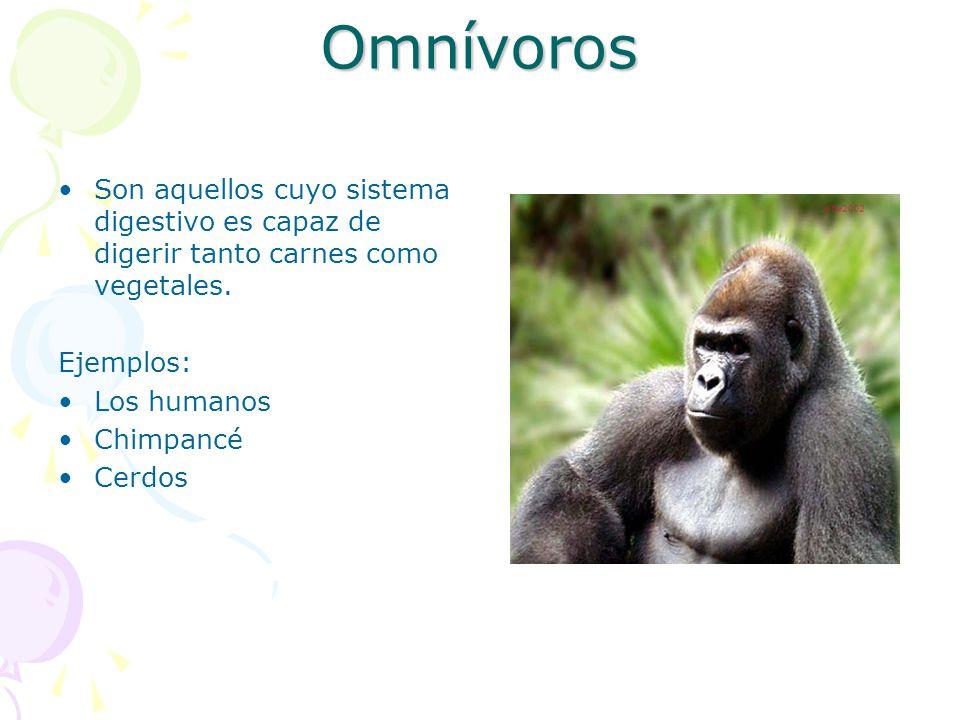 Omnívoros Son aquellos cuyo sistema digestivo es capaz de digerir tanto carnes como vegetales. Ejemplos: