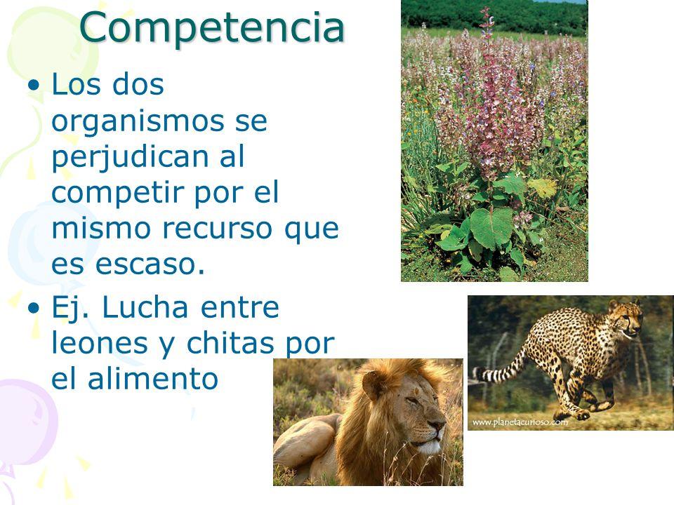 Competencia Los dos organismos se perjudican al competir por el mismo recurso que es escaso.