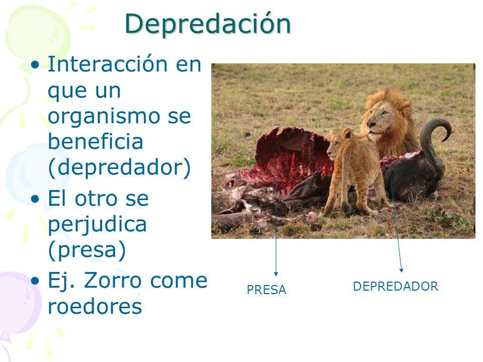 Depredación Interacción en que un organismo se beneficia (depredador)