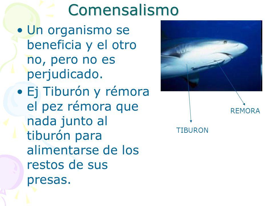 Comensalismo Un organismo se beneficia y el otro no, pero no es perjudicado.