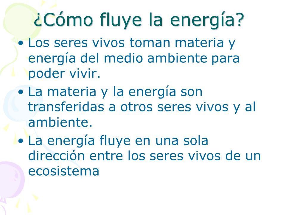 ¿Cómo fluye la energía Los seres vivos toman materia y energía del medio ambiente para poder vivir.