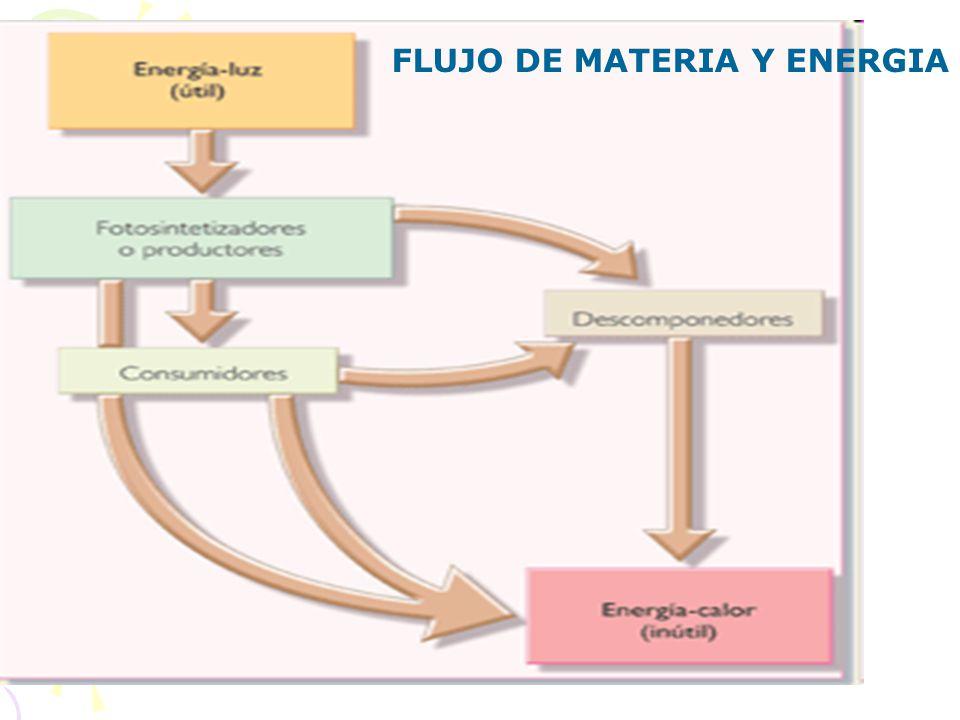 FLUJO DE MATERIA Y ENERGIA