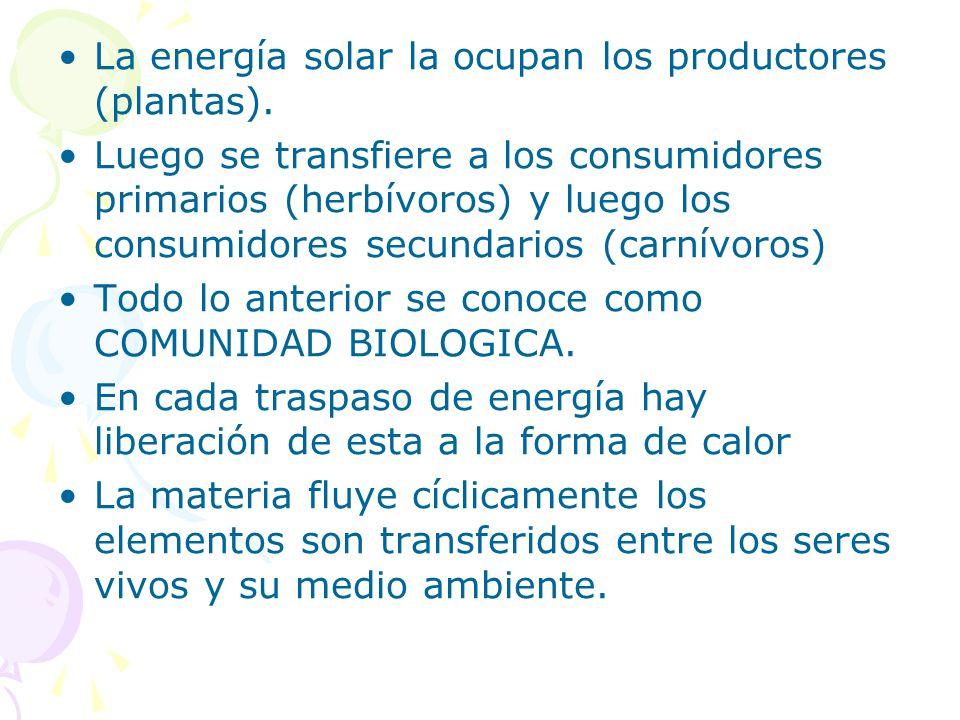 La energía solar la ocupan los productores (plantas).