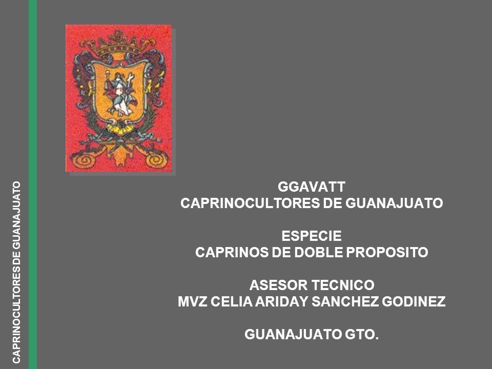 GGAVATT CAPRINOCULTORES DE GUANAJUATO ESPECIE CAPRINOS DE DOBLE PROPOSITO ASESOR TECNICO MVZ CELIA ARIDAY SANCHEZ GODINEZ GUANAJUATO GTO.