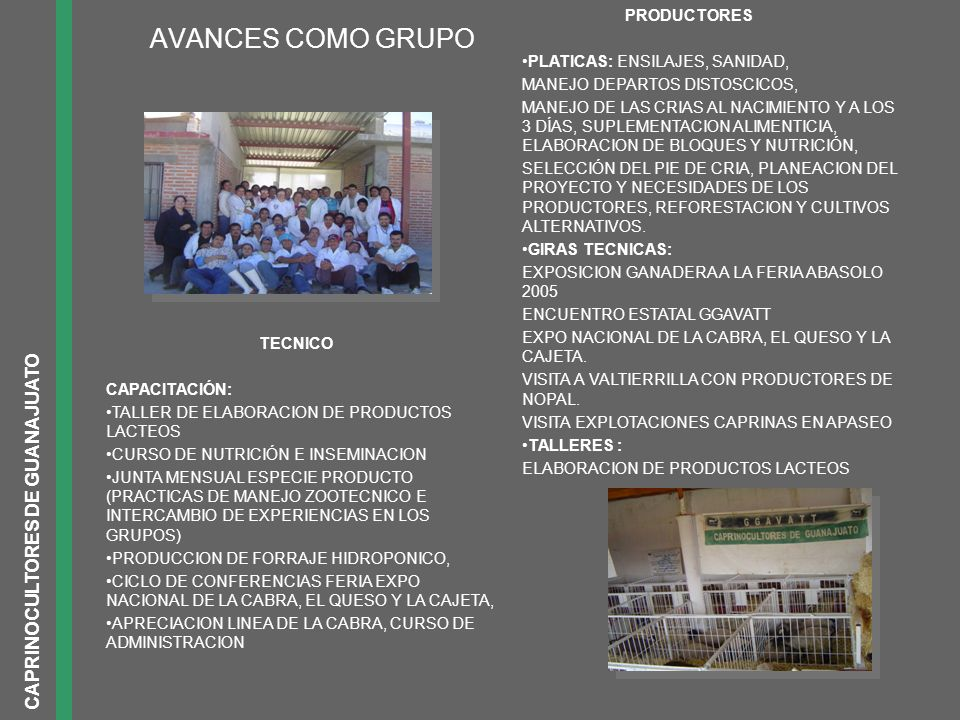 AVANCES COMO GRUPO CAPRINOCULTORES DE GUANAJUATO PRODUCTORES