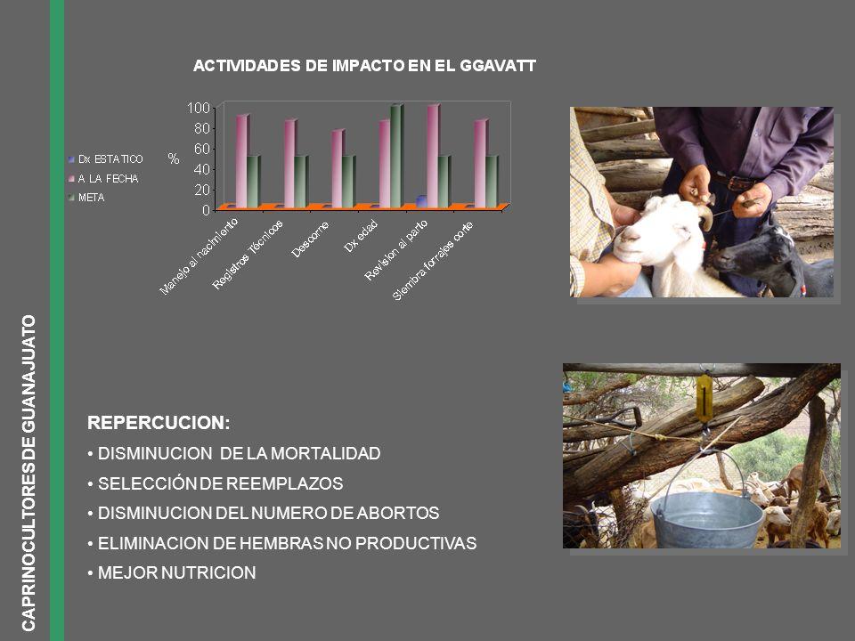REPERCUCION: CAPRINOCULTORES DE GUANAJUATO