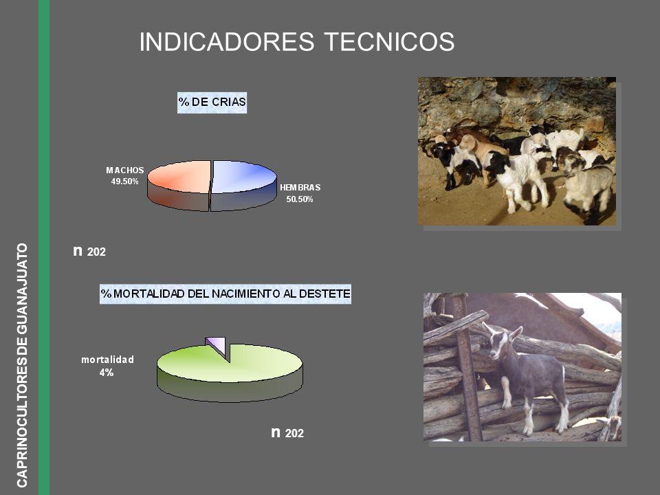INDICADORES TECNICOS n 202 CAPRINOCULTORES DE GUANAJUATO n 202