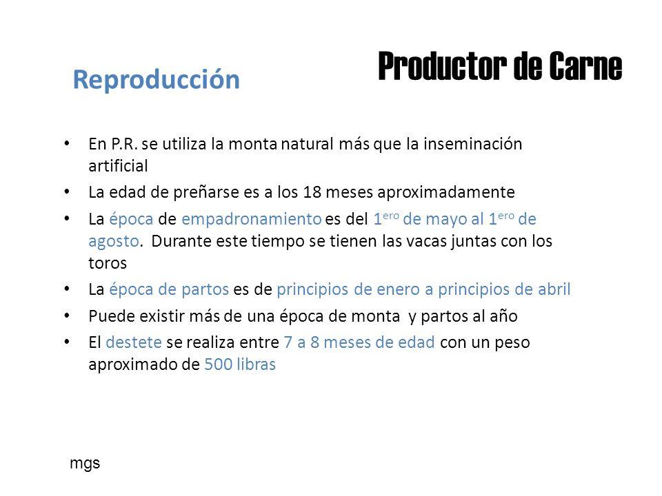 Productor de Carne Reproducción