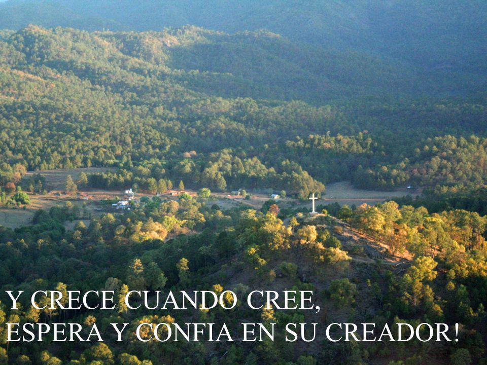 Y CRECE CUANDO CREE, ESPERA Y CONFIA EN SU CREADOR!
