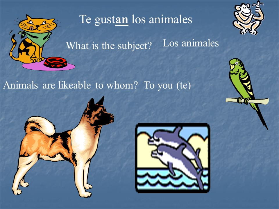 Te gustan los animales Los animales What is the subject
