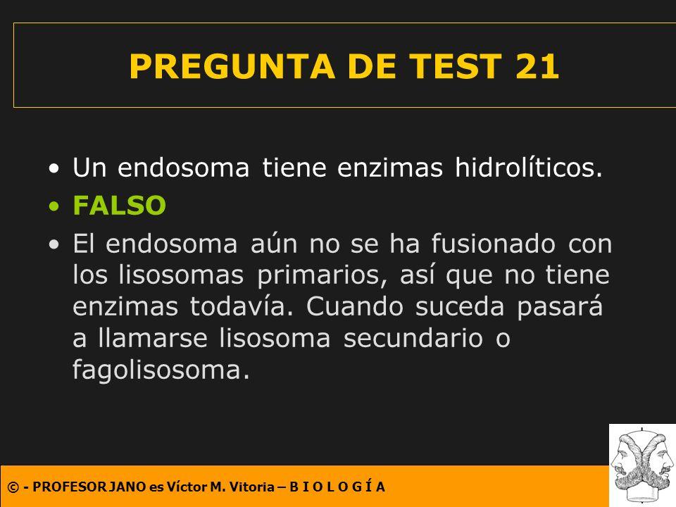 PREGUNTA DE TEST 21 Un endosoma tiene enzimas hidrolíticos. FALSO