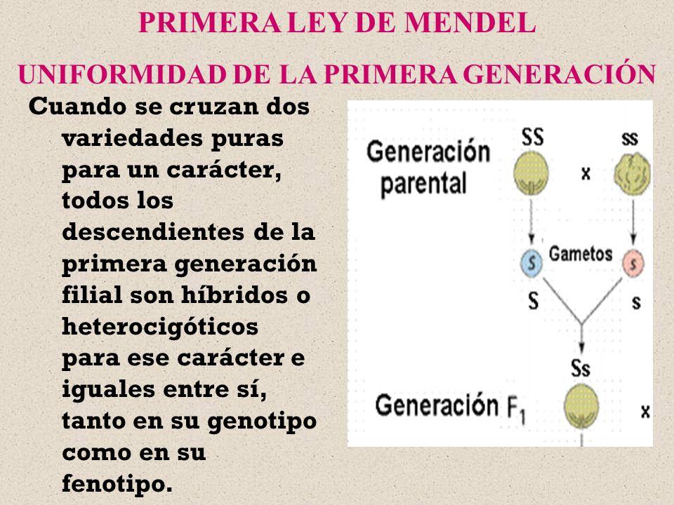 UNIFORMIDAD DE LA PRIMERA GENERACIÓN