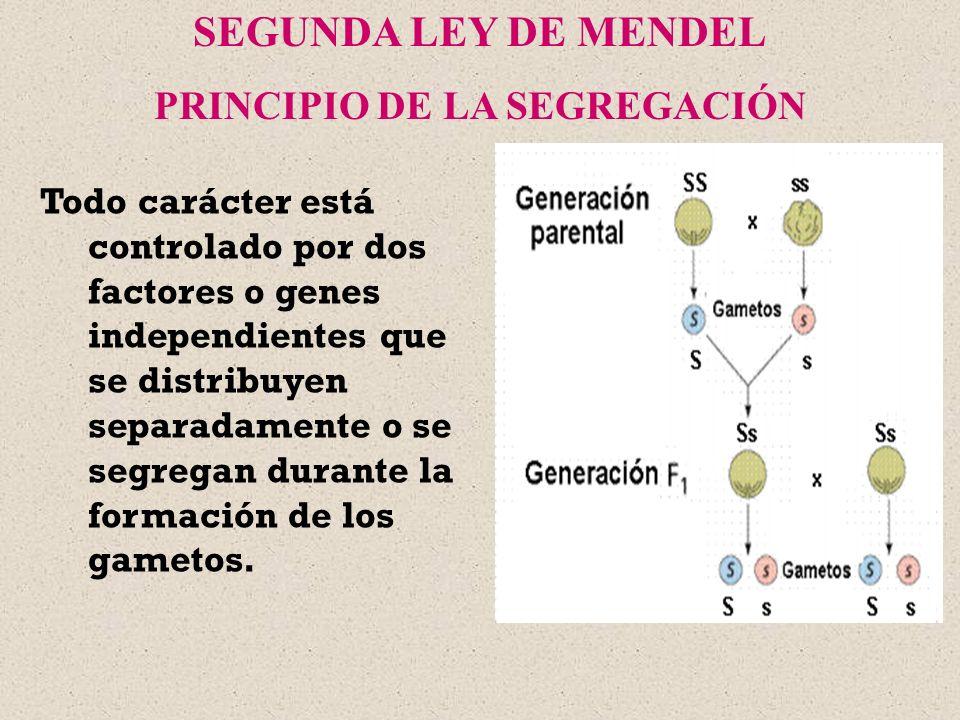 PRINCIPIO DE LA SEGREGACIÓN
