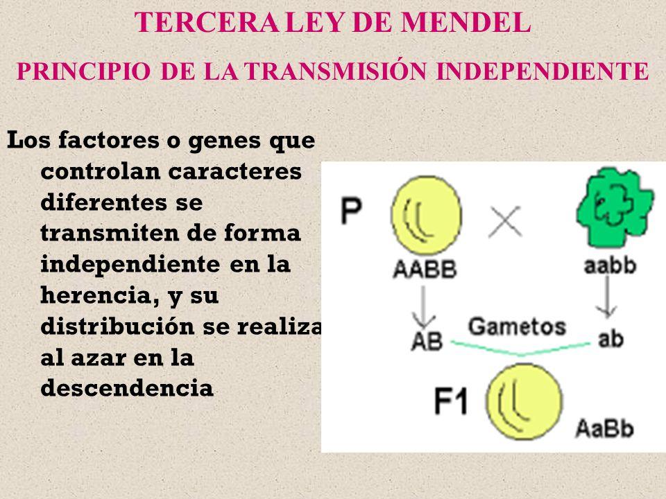 PRINCIPIO DE LA TRANSMISIÓN INDEPENDIENTE