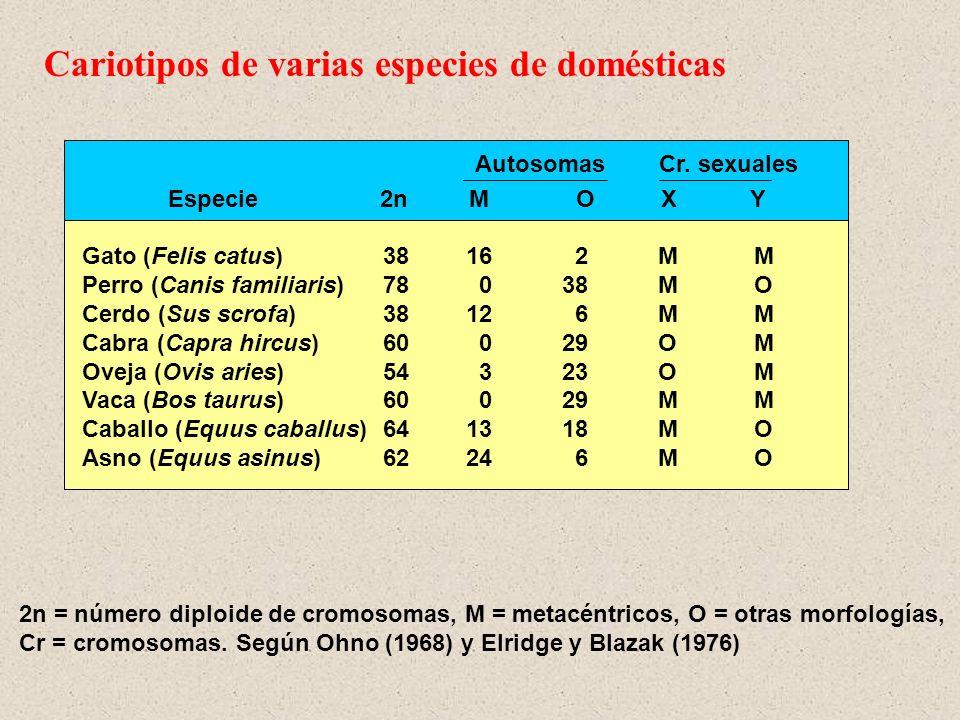 Cariotipos de varias especies de domésticas
