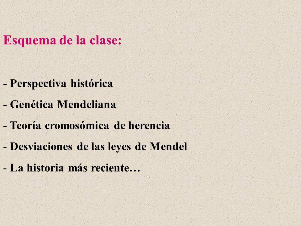 Esquema de la clase: - Perspectiva histórica - Genética Mendeliana