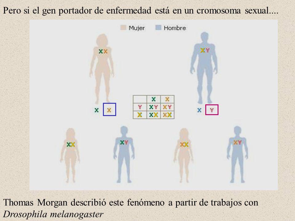 Pero si el gen portador de enfermedad está en un cromosoma sexual....