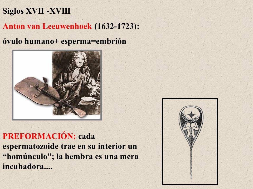 Anton van Leeuwenhoek (1632-1723): óvulo humano+ esperma=embrión