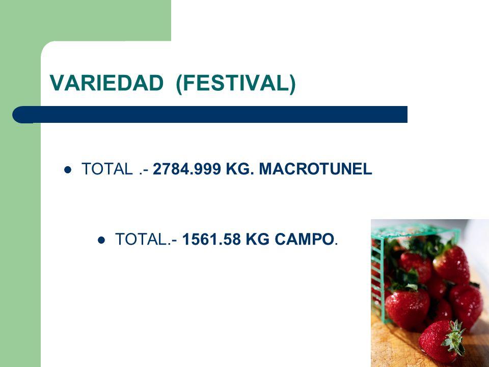 VARIEDAD (FESTIVAL) TOTAL .- 2784.999 KG. MACROTUNEL