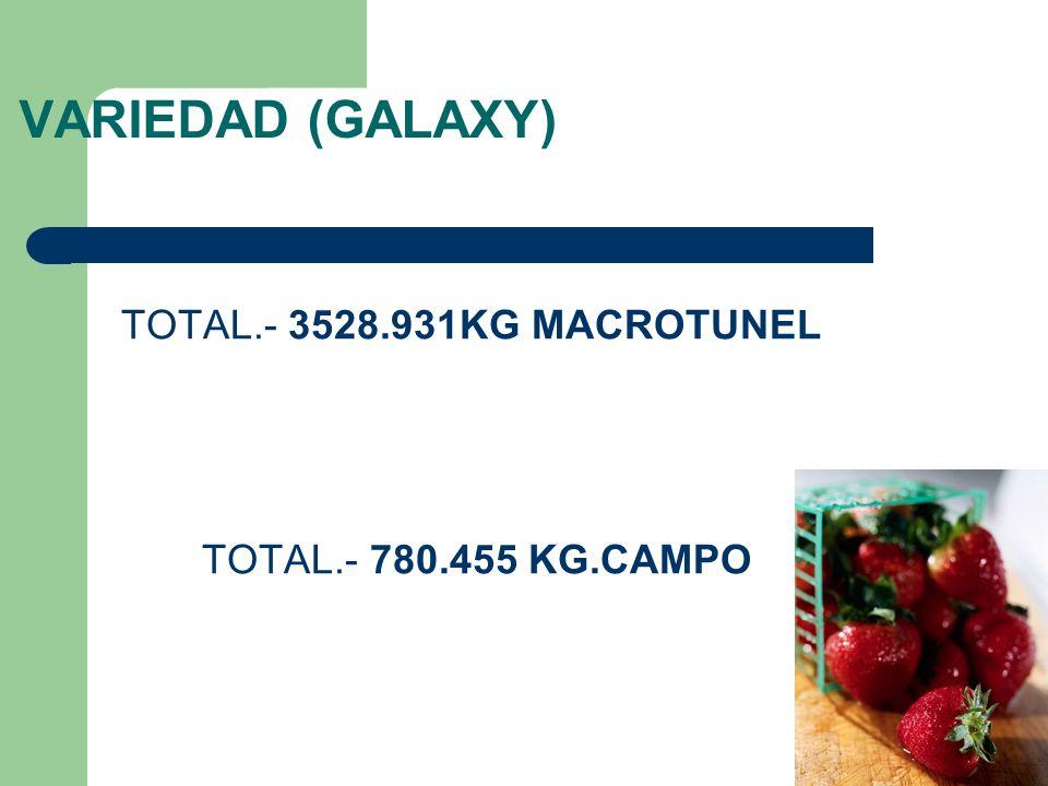 VARIEDAD (GALAXY) TOTAL.- 3528.931KG MACROTUNEL