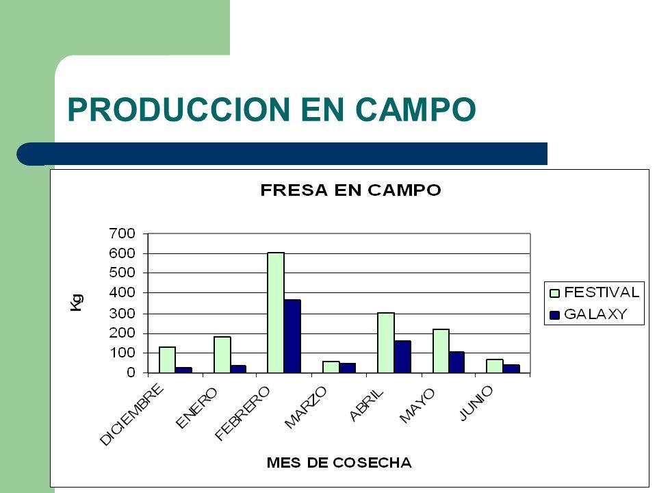 PRODUCCION EN CAMPO