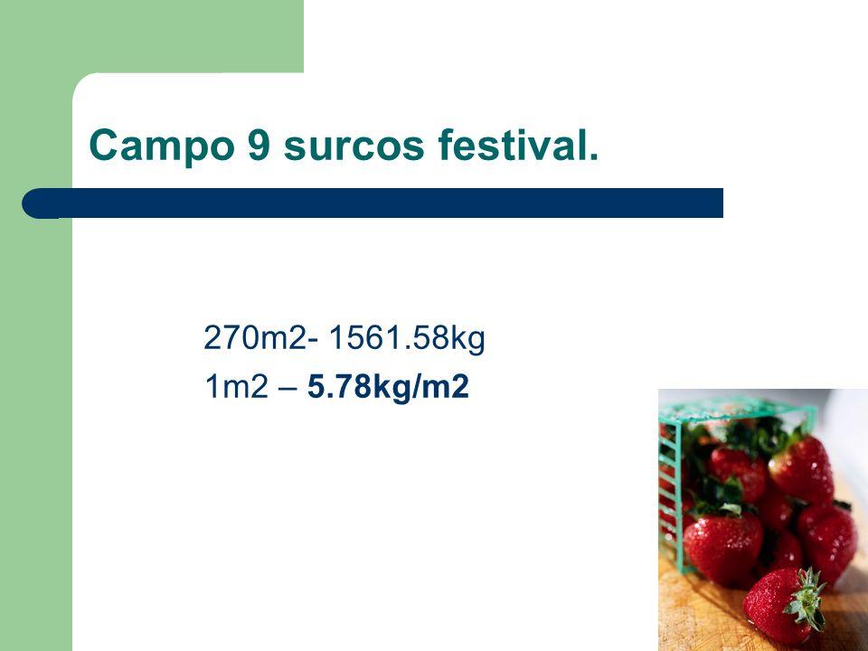 Campo 9 surcos festival. 270m2- 1561.58kg 1m2 – 5.78kg/m2