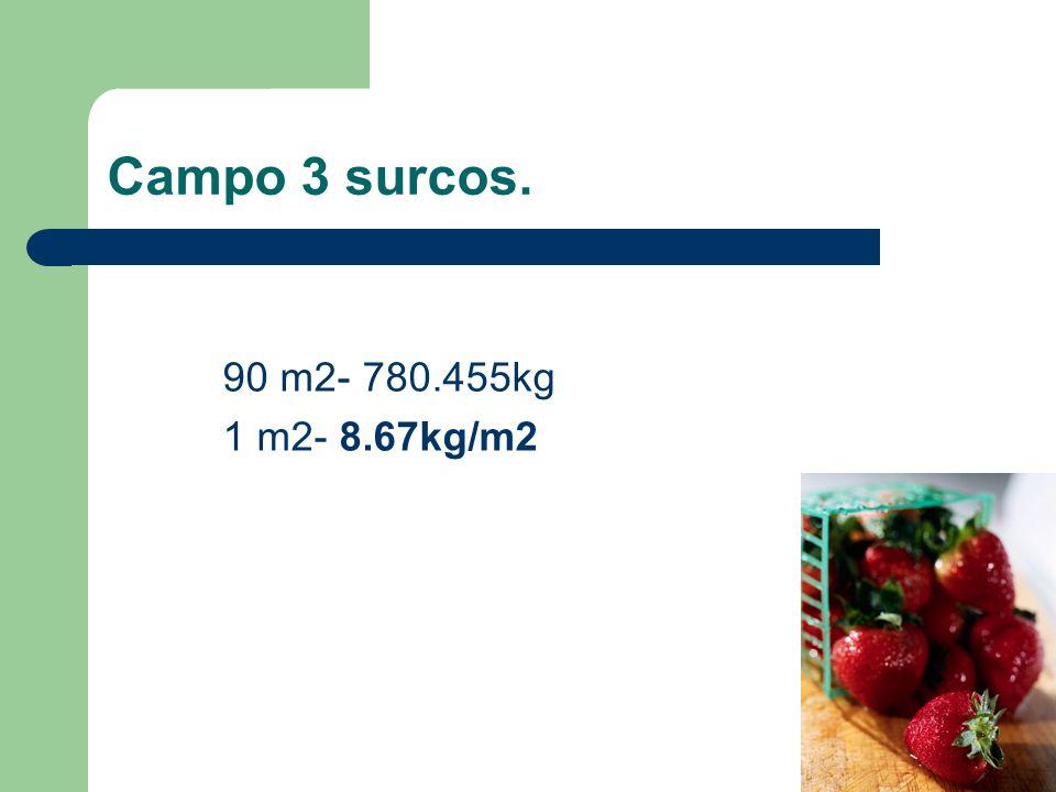 Campo 3 surcos. 90 m2- 780.455kg 1 m2- 8.67kg/m2