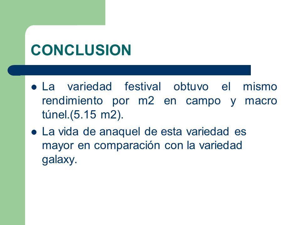 CONCLUSIONLa variedad festival obtuvo el mismo rendimiento por m2 en campo y macro túnel.(5.15 m2).