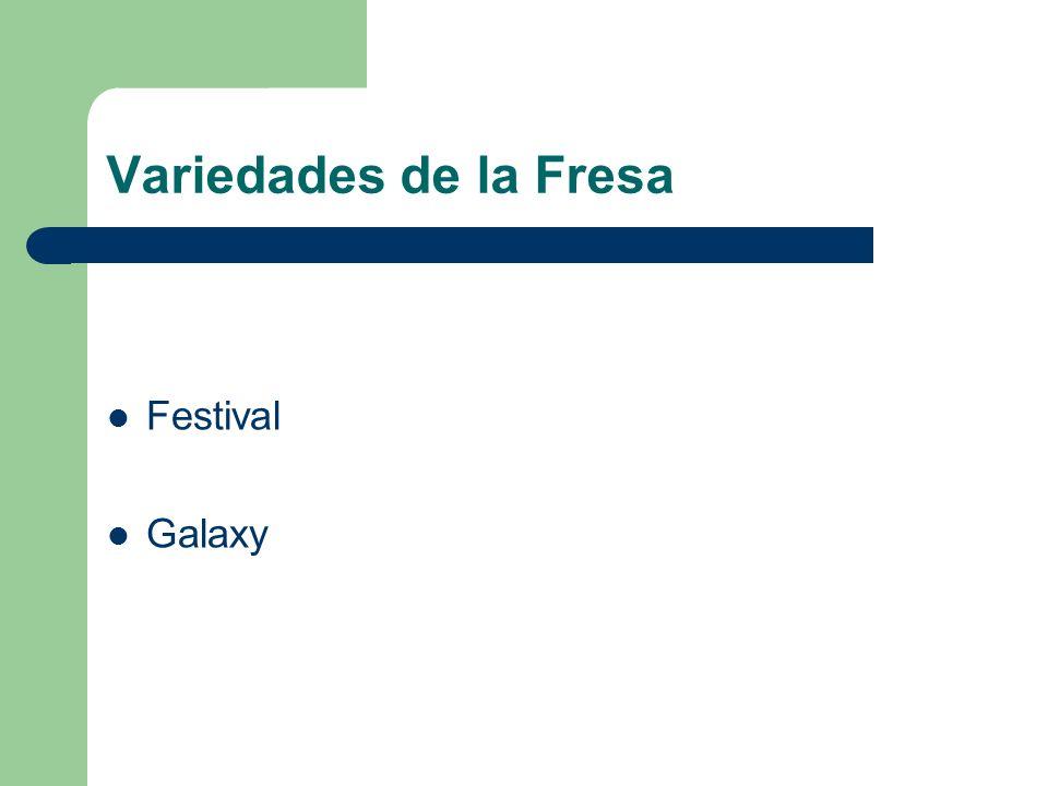 Variedades de la Fresa Festival Galaxy