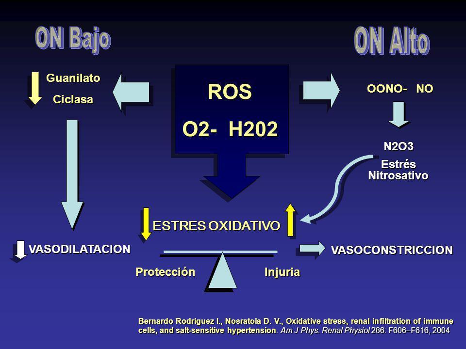 ON Bajo ON Alto ROS O2- H202 ESTRES OXIDATIVO Guanilato Ciclasa