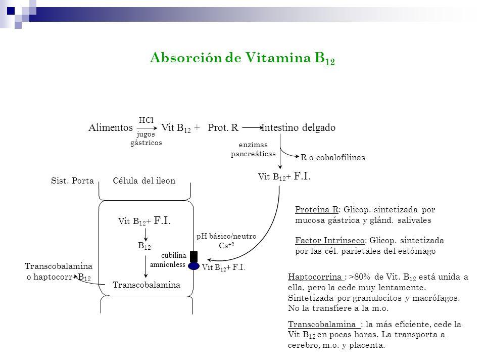 Transcobalamina o haptocorr- B12
