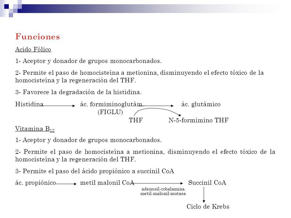 Funciones Acido Fólico 1- Aceptor y donador de grupos monocarbonados.