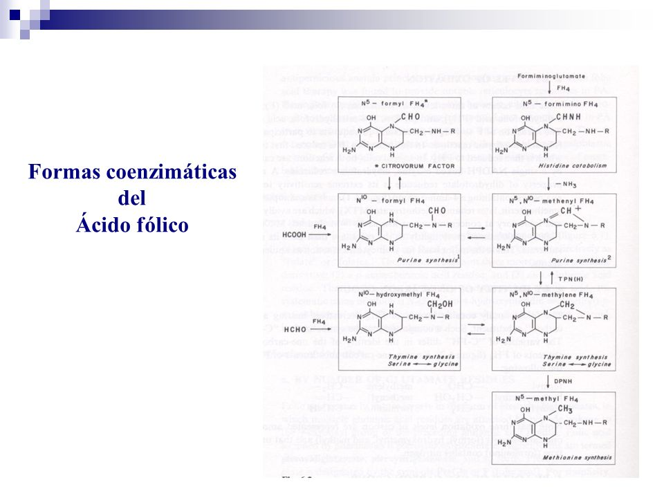 Formas coenzimáticas del