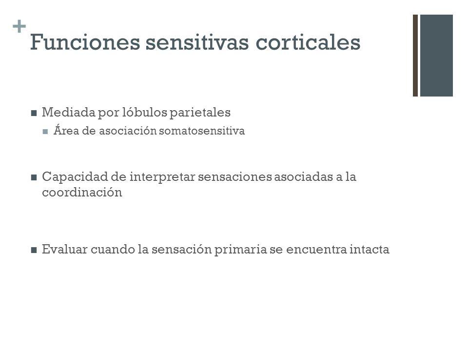 Funciones sensitivas corticales