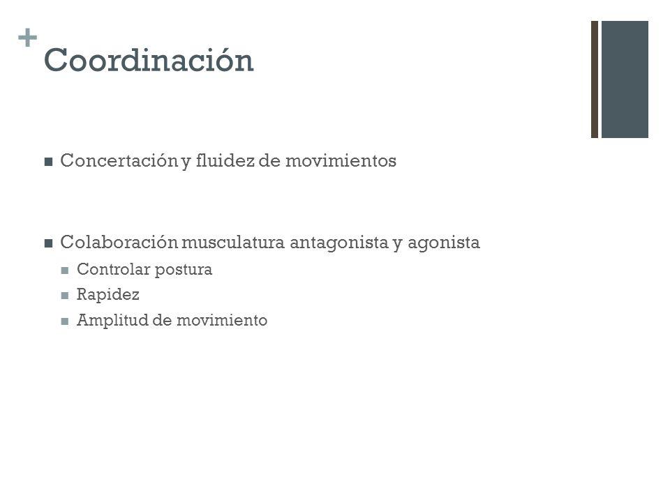 Coordinación Concertación y fluidez de movimientos